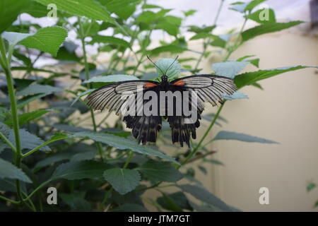 Monarch butterfly resting - Stock Photo