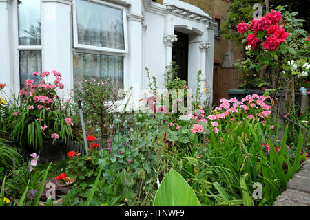 A beautiful flower garden roses, geraniums, hollyhocks in bloom in front of a house in West Green Road, Seven Sisters, - Stock Photo