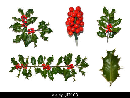 A collection of isolated holly images including a border, corner, berries, sprig and leaf. - Stock Photo