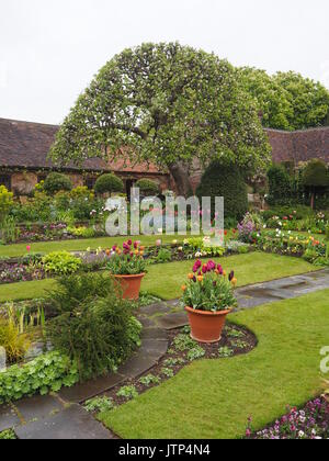 Chenies Manor garden,Buckinghamshire. Diagonal portrait view of sunken garden with apple tree, paths and tulips - Stock Photo