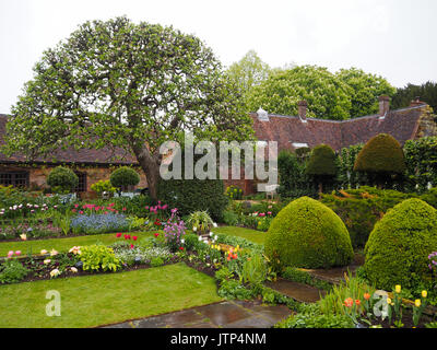 Landscape view of Chenies Manor Sunken garden with apple tree in blossom. Pretty tulips and spring foliage framed - Stock Photo