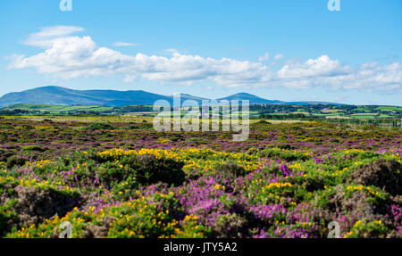 View towards Snaefell Mountain from Point Of Ayre - Stock Photo