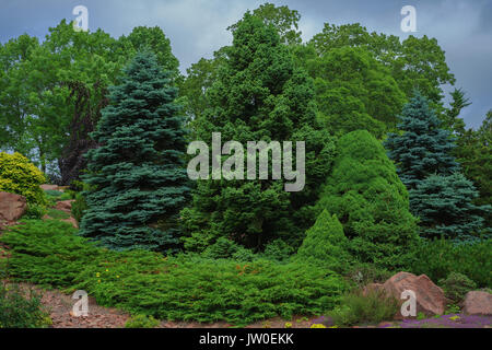 Collection of evergreen shrubbery. - Stock Photo