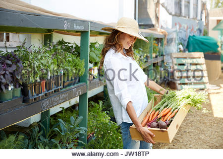 Woman harvesting carrots and potatoes at plant nursery - Stock Photo