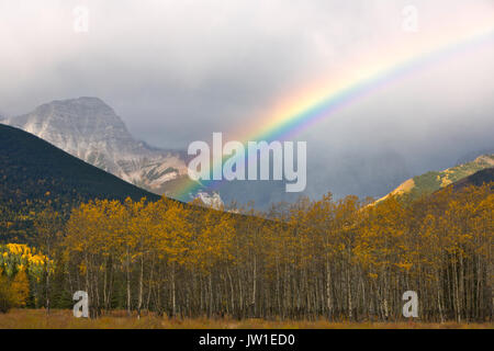 A rainbow arcs over fall aspen in the Canadian Rockies of Banff National Park. Canada - Stock Photo