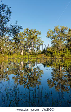 Toronto Islands Park lagoon trees reflected Toronto Ontario Canada - Stock Photo