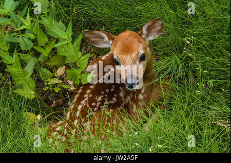 Baby Deer - Stock Photo