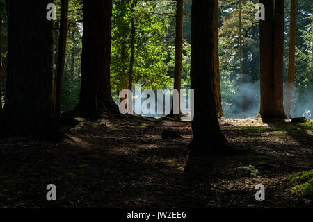Smoke in Bolderwood Forest from a barbecue photographed with backlighting for atmospere - Stock Photo