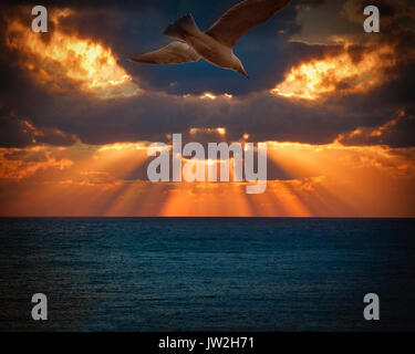PHOTO ART: Herring Gull in Flight - Stock Photo