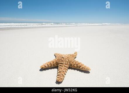 Starfish on empty sandy beach - Stock Photo