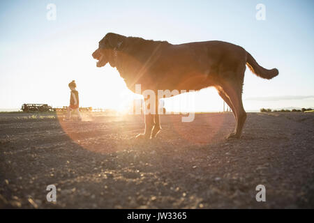 USA, Colorado, Little girl (4-5) walking on dirt road with Chocolate Labrador standing in foreground - Stock Photo