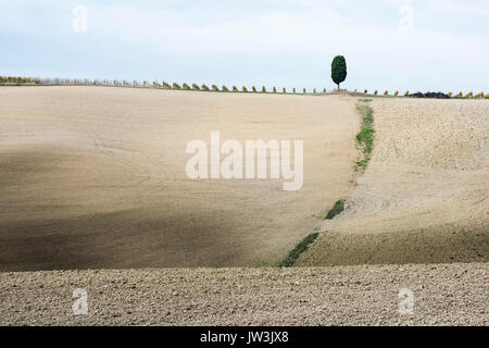 Italy, Tuscany, San Quirico D'orcia, Lonely cypress tree standing on top of gray Tuscany hill with vineyard rows - Stock Photo