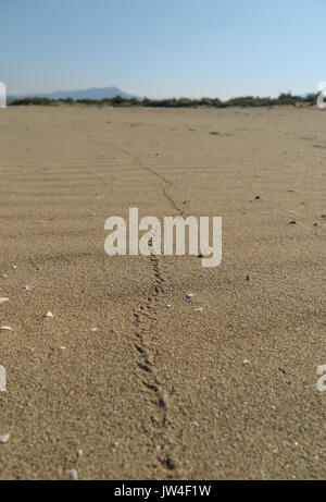 beetle footprint in sand - Stock Photo