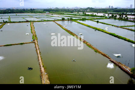 Qinzhou. 10th Aug, 2017. Photo taken on Aug. 10, 2017 shows a general view of shrimp ponds in Jiuya Village of Jianshan - Stock Photo