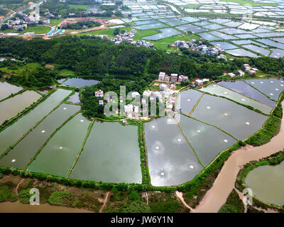 Qinzhou. 10th Aug, 2017. Photo taken on Aug. 10, 2017 shows a general view of shrimp ponds in Qinnan District of - Stock Photo