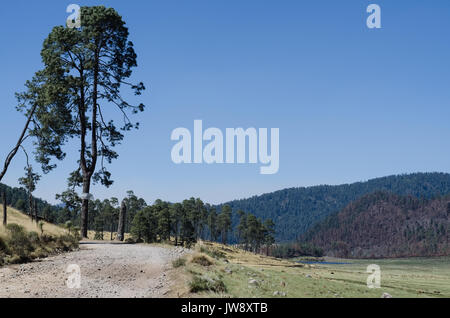 Scenic view of trees on field against blue sky - Stock Photo