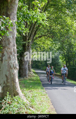 A family cycling gently along a row of several hundred year old plane trees, on the ex-towpath of the Adour river - Stock Photo
