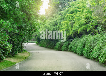 View of the asphalt road in the park at day time. - Stock Photo