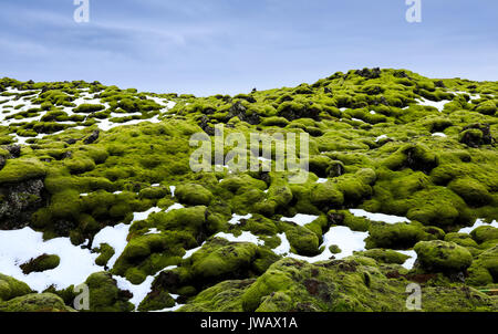 Eldhraun lava fields Covered With Moss,  Southern of Iceland - Stock Photo