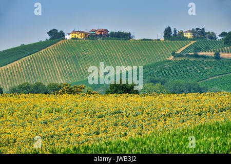 Rural landscape at summertime along the road from Castel San Giovanni to Ganaghello (Piacenza, Emilia Romagna, Italy), - Stock Photo