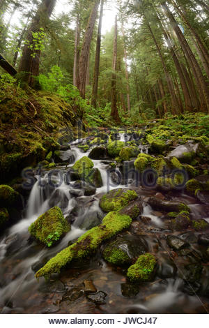 Small creek running through Sol Duc Forest. - Stock Photo