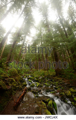 Small creek running through a Sol Duc Forest. - Stock Photo