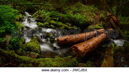 Small creeks running through Spruce forest. - Stock Photo