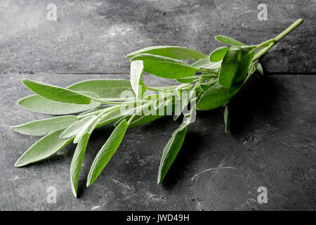 Fresh, organic sage twig on dark wooden board background - Stock Photo