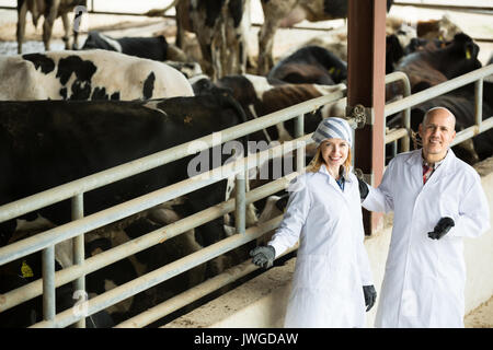 Mature and young veterinary technicians standing near cows in livestock barnm - Stock Photo