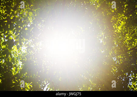 the rays of the sun filtering through the leaves - Stock Photo
