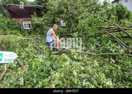 Rytel, Poland. 12th Aug, 2017. Fallen trees are seen near the Rytel, Poland on 12 August 2017 Five people have been - Stock Photo