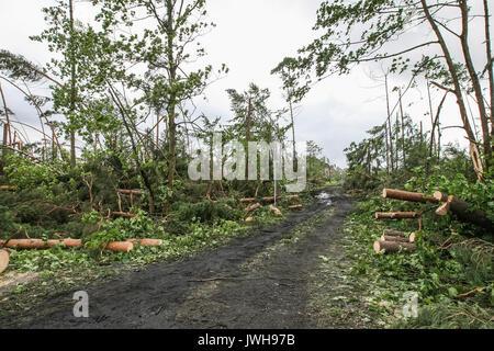 Suszek, Poland. 12th Aug, 2017. Fallen trees are seen near the Suszek village, Poland on 12 August 2017 Five people - Stock Photo
