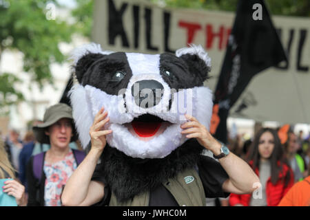 London, UK. 12th Aug, 2017. The Badger Trust, the Make Hunting History coalition and Care2 hold a joint protest - Stock Photo