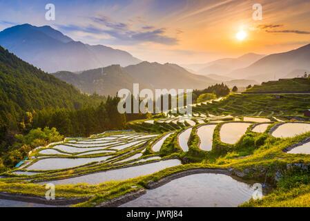 Rice terraces at sunset in Maruyama-senmaida, Kumano, Japan. - Stock Photo