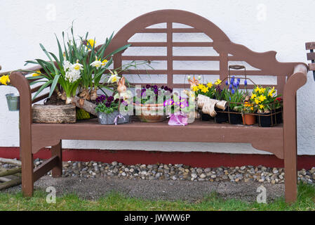 Daffodils (Narcissus), violets (Viola), primroses (Primula) and grape hyacinths (Muscari) in flower pots on a garden - Stock Photo