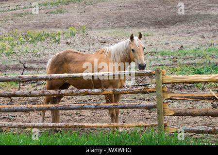 A Lovely Horse in a Field near Lillooet in British Columbia Canada - Stock Photo