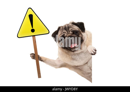 smiling pug puppy dog holding up yellow warning, attention sign with exclamation mark, isolated on white background - Stock Photo