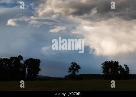 A large thunderstorm passing over cottonwood trees on a ranch in Jackson Hole, Wyoming. - Stock Photo