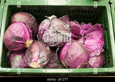 Cabbage red background - Stock Photo