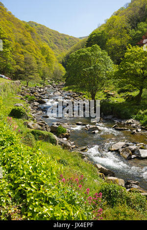 Beautiful Devon scenery from walk to Watersmeet near Lynmouth along River Lyn - Stock Photo