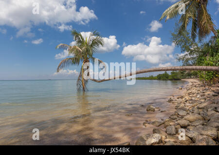 A lone coconut palm tree against a blue sky at Hin Kong Beach, Koh Phangan, Thailand - Stock Photo
