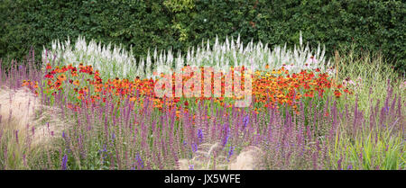 Island beds of hardy perennial plants such as salvia veronica and helenium at Hauser and Wirth Bruton Somerset UK - Stock Photo