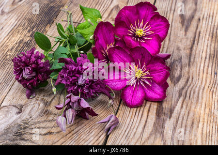 Clematis of different colors. Studio Photo - Stock Photo