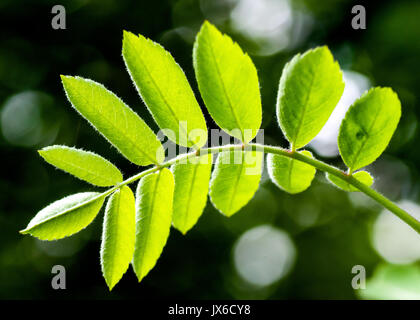 Fresh green leaf background. Creative layout made of green leaves. Flat lay. Nature background. Background pattern - Stock Photo
