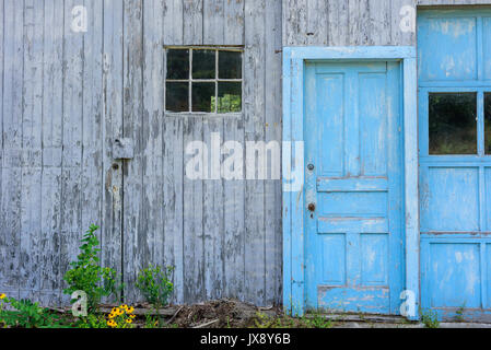 abandoned roadside barn with peeling paint and bright blue faded doors - Stock Photo