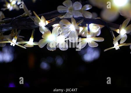Shining Light Emitting Diode (LED) lights against a dark background. - Stock Photo
