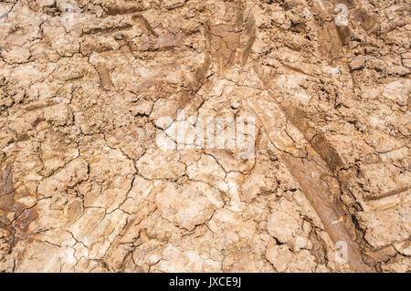 Wet surface soil dry and crack with the heat of the sun making mud dry arid cracked landscape closeup to crack dry clay on ground stock photo sciox Images