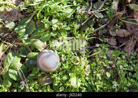 Grey gemstone on grass - Stock Photo