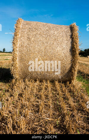 Round bales of hay - or hay rolls - in a farm field after the summer harvest, Langtoft, near Peterborough, Lincolnshire, - Stock Photo