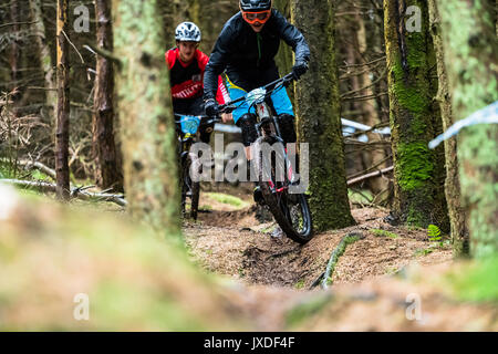 Innerleithen, Peebles, Scottish Borders, UK. 13th August 2017. Mountain bikers compete in the POC Scottish Enduro - Stock Photo
